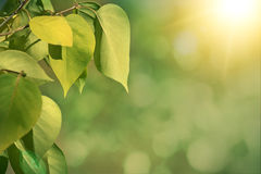 Green autumn background with shallow focus. And bokeh royalty free stock photography