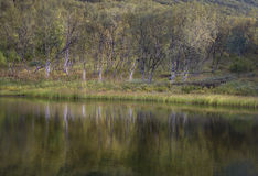 Green and autumn colored birch forest reflecting in the river water Stock Photos