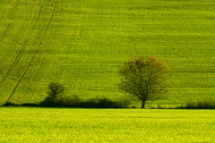Green autumn field Royalty Free Stock Photography