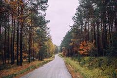 Green Autumn. Forest in Poland, Autumn 2016 Royalty Free Stock Photos