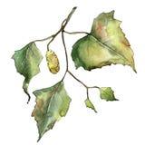Green autumn leaf birch. Leaf plant botanical garden floral foliage. Isolated illustration element. Aquarelle leaf for background, texture, wrapper pattern stock images