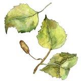 Green autumn leaf birch. Leaf plant botanical garden floral foliage. Isolated illustration element. Aquarelle leaf for background, texture, wrapper pattern stock illustration