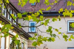 Green leaves on the background of old German house in Leonberg Royalty Free Stock Image