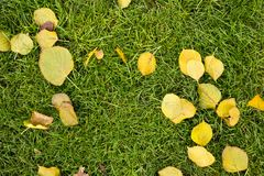 Green autumnal lawn with the fallen yellow leaves. In the park. Good autumnal mood stock images