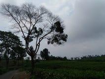 Green av naturen Arkivbilder