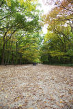 The green avenue. In Japan Royalty Free Stock Photography