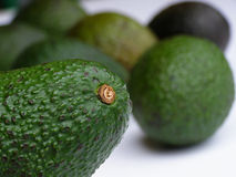 Green avocado Stock Photo