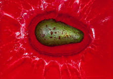 Green avocado in red water Stock Photo