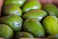 Green avocados at farmer market Stock Photos