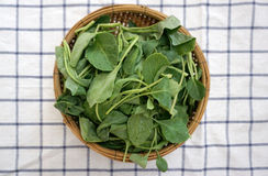 Green baby kale in the basket Stock Image