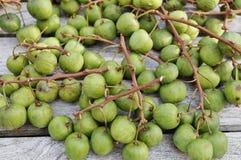 Green baby kiwi berries Stock Photos