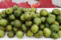 Green baby kiwi berries Royalty Free Stock Photo