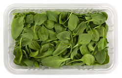 Green baby spinach in a clear box Stock Photos