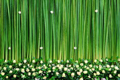 Green backdrop royalty free stock photo
