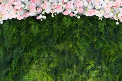 Green backdrop flowers arrangement Royalty Free Stock Photography