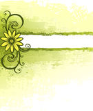 Green background. With floral design element Royalty Free Stock Photo