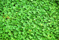 Green background. Lovely plant texture makes for perfect natural background Royalty Free Stock Photo