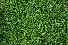 Green Background. Close-up view of green field Royalty Free Stock Photography