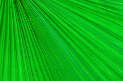 Green background. Image of a green leaf with straight lines Stock Image