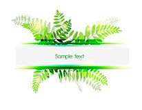 Green background. Green Vector seamless background with fern leafs Royalty Free Stock Photo
