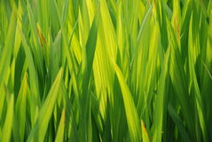 Green Background. Background of blades of green grass stock photos