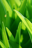 Green background. Close up of green leaves. Nice nature background Stock Photos