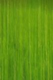 Green background. Nice shot of bright green background Royalty Free Stock Photos