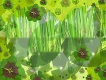 Green background. Fresh green background with clover stock photo
