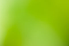 Green background. Green Abstract Forest Nature Background Stock Photography