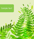 Green background with abstract leafs Royalty Free Stock Photos