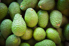 Green background of avocado heap Stock Photography