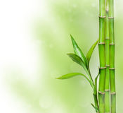 Green background with bamboo Stock Image