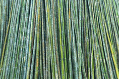 Green background bamboo. Green background of fresh hard bamboo Stock Image
