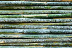 Green background bamboo Stock Photo