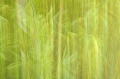 Green background with bamboo leaves. Abstract green background with bamboo leaves. Effect created with the camera shake when shooting royalty free stock photo
