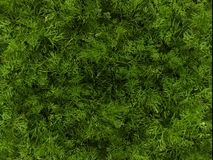 Green background based on photos of spring grass. stock photo