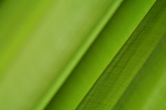 Green background with a beautiful cloth Stock Photo