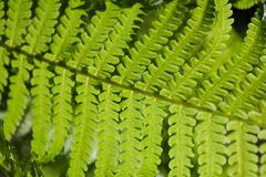 Green background of beautiful fern leaves. Bright green foliage, natural floral texture and backdrop, copy space Royalty Free Stock Image
