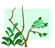 Green background bird on a branch Stock Image
