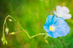 Green background with blue flax flower Stock Photos