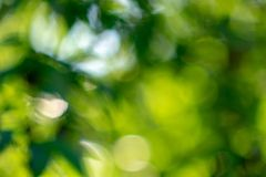Natural with a bokeh effect a layout of green foliage in a summer garden. Creative background. Green background. Blurred with the effect of bokeh spring foliage Stock Photos