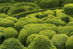 Green background. Boxwood plants of different shapes creating beautiful green scenery Stock Photos