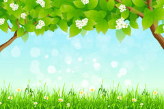 Green Background with Branches of Trees and Grass Stock Image