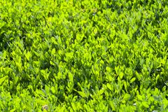 Green background of fresh small grass stock images