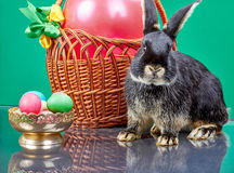 On a green background bunny near Easter basket with a balloon Royalty Free Stock Photos