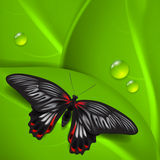 Green background with butterfly and dew Royalty Free Stock Photo
