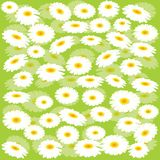 Green background with chamomiles. Green floral background with chamomiles Royalty Free Stock Images