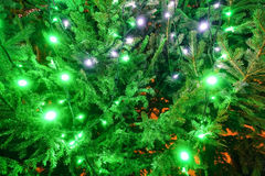 Green background of Christmas tree decorations Stock Photos
