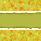 Green background with colorful autumn leaves. Beautiful green autumn background with colorful leaves pattern. Wallpaper with yellow, orange, red autumn leaf fall Royalty Free Stock Photography