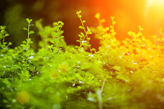 Green Background Concept. Shallow depth of field. Green and sun flare Background Concept. Shallow depth of field Royalty Free Stock Photos
